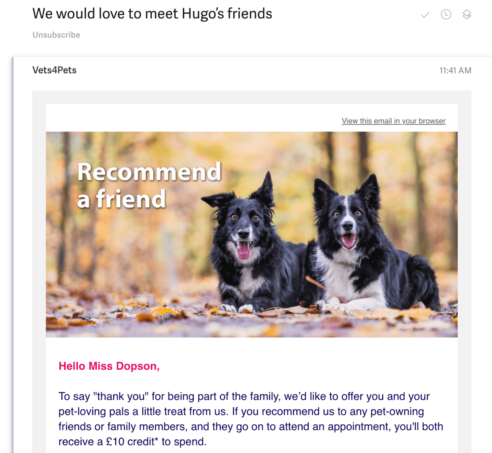 Vets4Pets email campaign