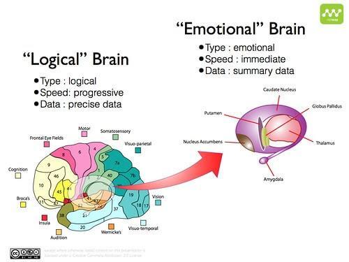 Rational versus emotional brain