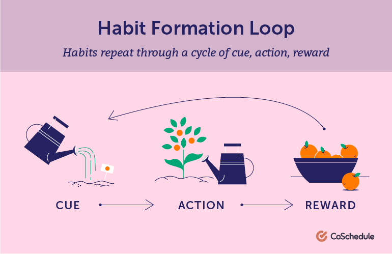 Habits repeat through a cycle of cue, action, and reward.